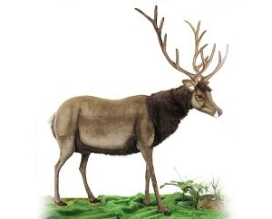 Life-size and realistic plush animals.  0186 - DEER MALE