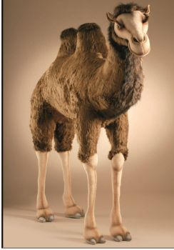 """Life-size and realistic plush animals.  2064 - CAMEL EX LARGE 70 """"L x 66.3""""H (SP)"""