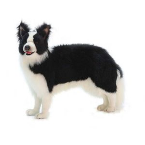 BORDER COLLIE STND 33''L Plush Toy
