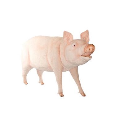 """Life-size and realistic plush animals.  4786 - PIG LIFE SIZE 64""""L"""
