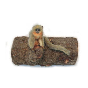 TITI MONKEY 7''L(CAQUETA) Plush Toy
